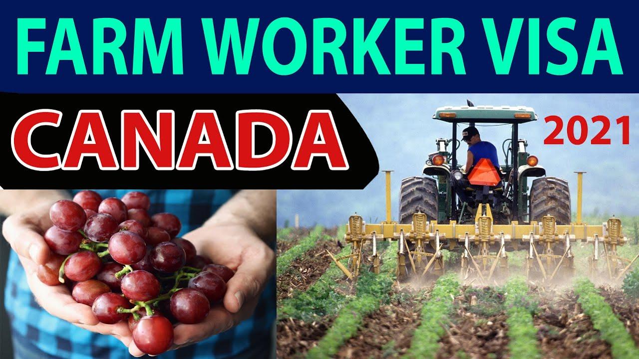 Fruit Farm jobs in Canada Work Visa Application Process